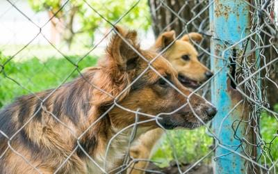 Charity animals